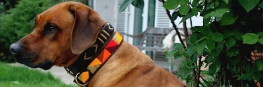 Perlenbesetzte Hundehalsbänder