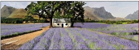 Duftsäckchen - gefüllt mit Lavendel