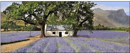 Lavendel und Lavendel-Duftsäckchen