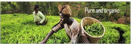 Mount Kenya Tee - schwarz, grün, weiß und lila
